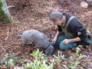 Truffle Hunting with Dog