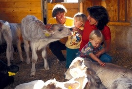 Alpine Farm Stay and Cheesemaking