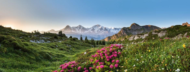 Panoramonic view of wildflowers near Lauterbrunnen Valley