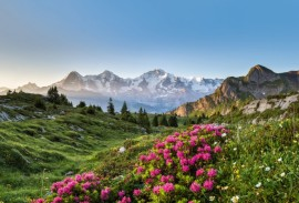 Jungfrau & Saas-Fee Wildflower Hikes
