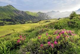 Jungfrau & Saas-Fee Wildflower Hikes