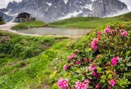 Wildflowers in the Italian Dolomites