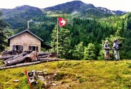 Bovine Trail