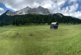 Meadow in the Dolomites   Photo by Macie Duncan