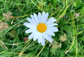 Daisy in the Dolomites   Photo by Macie Duncan