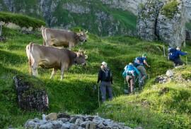 Hiking along Jungfrau mountain ridge