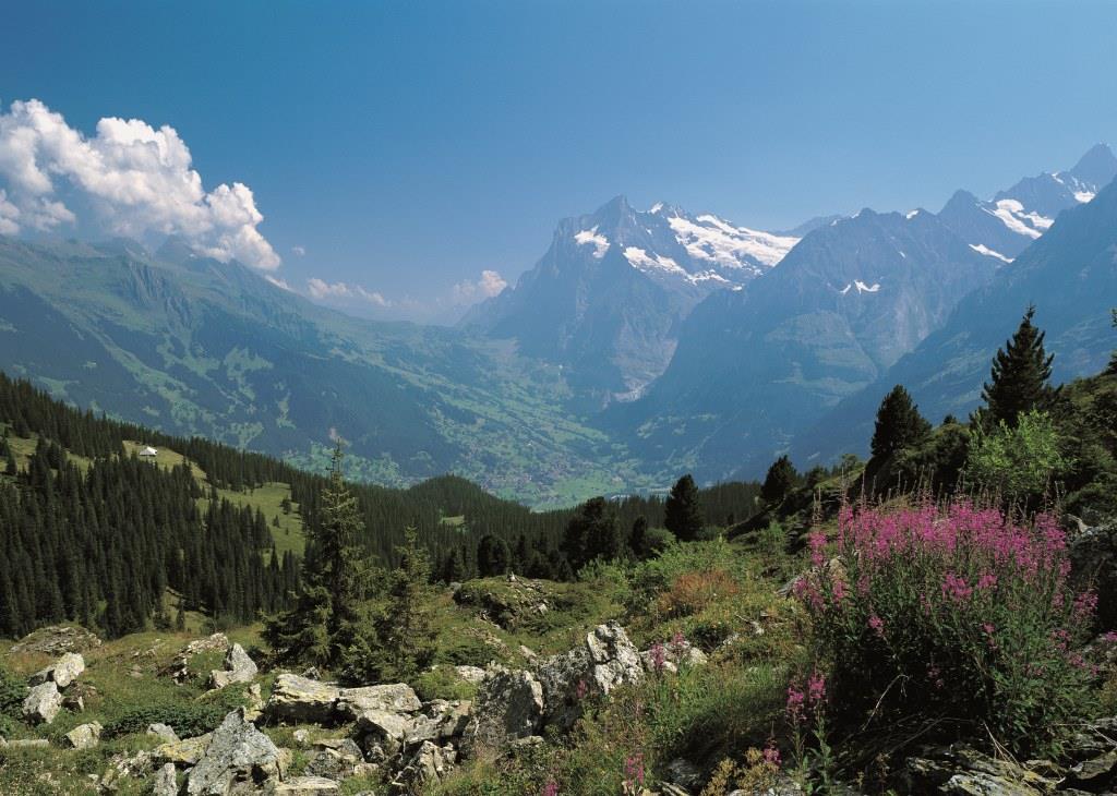 Grindelwald Hiking Eiger Trail