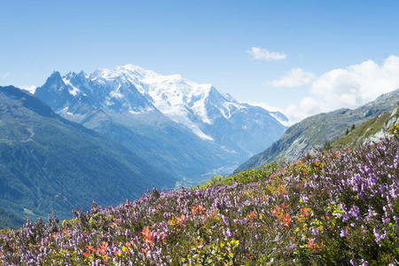 Wildflowers on the Tour du Mont Blanc